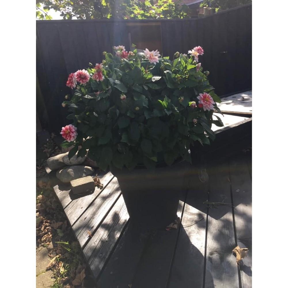 BloomsEasyplantmultifunktionsblomsterpotte-07